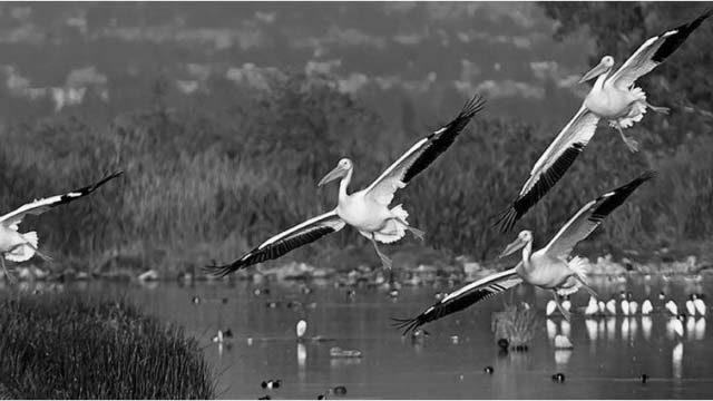 AICA (Áreas de Importancia para la Conservación de las Aves)
